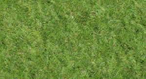 Textura de grama alta resolucion2, en Follajes y vegetales – Texturas