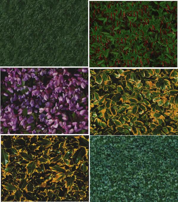 Textura de hojas y grama, en Follajes y vegetales – Texturas