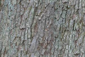 Textura de tronco, en Madera – Texturas