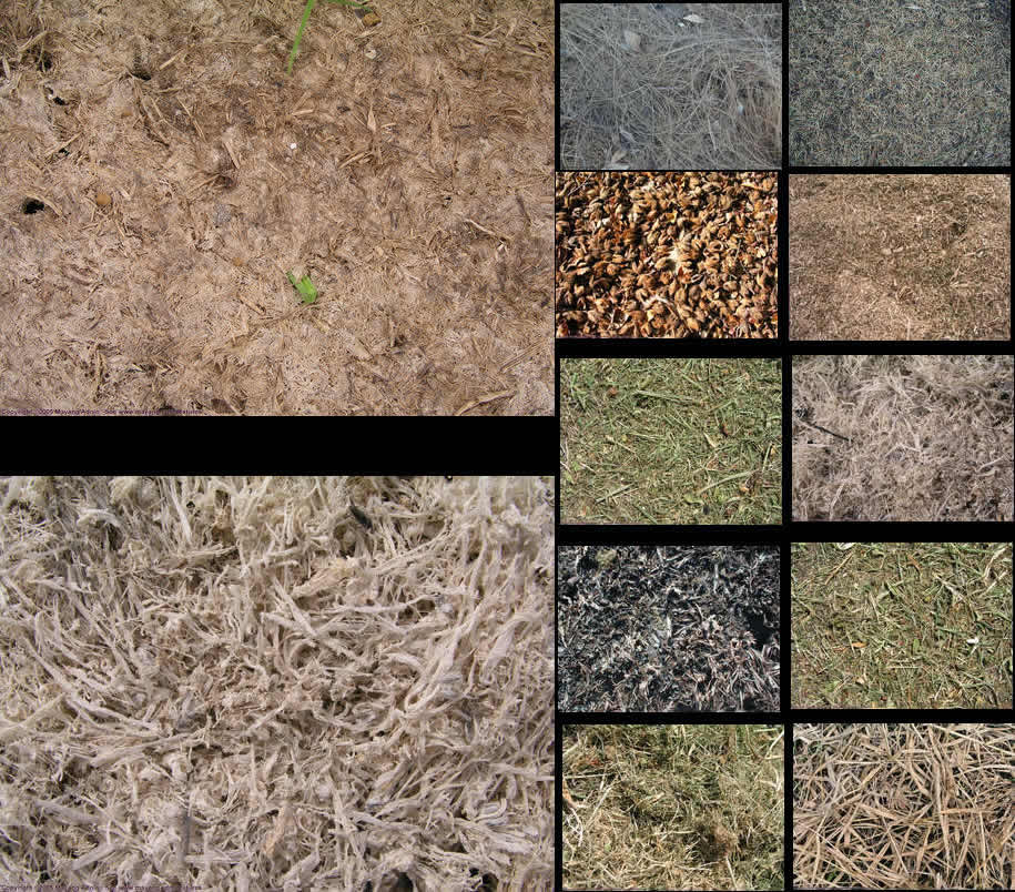 imagen Textura - follaje, en Follajes y vegetales - Texturas