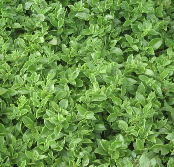 Textura planta, en Follajes y vegetales – Texturas