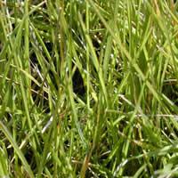Textura vegetal, en Follajes y vegetales – Texturas