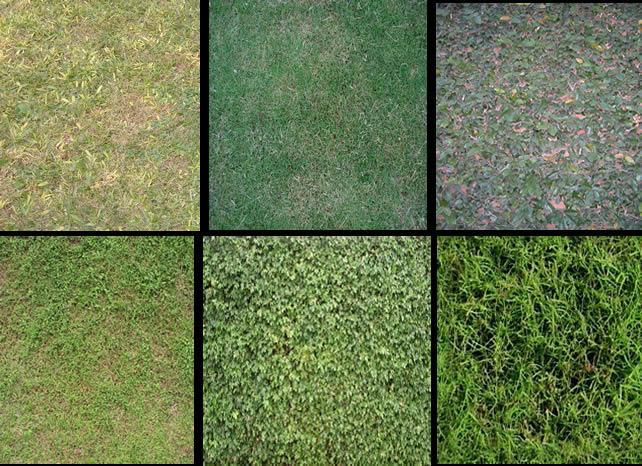 Texturas cesped, en Follajes y vegetales – Texturas