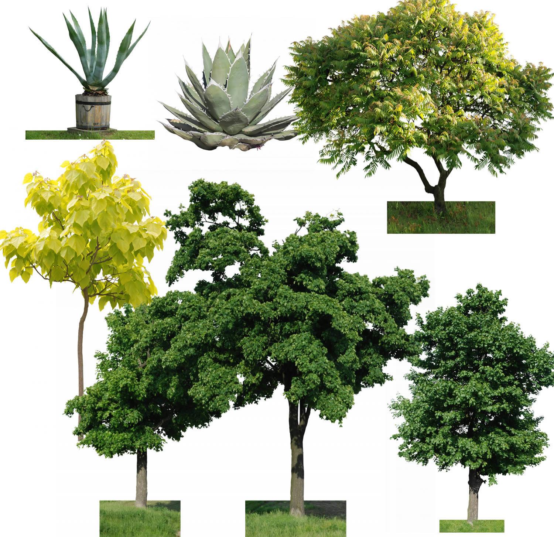 imagen Planos de Arboles en , Fotografías para renders - Arboles y plantas