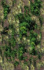Tierra con verde, en Tierra – Texturas