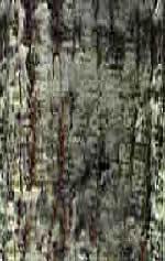 Tronco de arbol, en Follajes y vegetales – Texturas