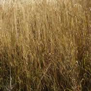 imagen Vegetación, en Follajes y vegetales - Texturas