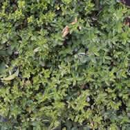 imagen Vegetales, en Follajes y vegetales - Texturas